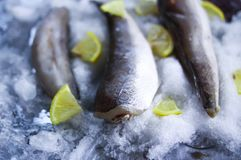 Fresh raw sea fish and lemon slices on ice surface. Fresh raw sea fish and lemon peaces on ice surface Royalty Free Stock Images