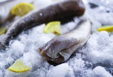 Fresh raw sea fish and lemon slices on ice surface. Fresh raw sea fish and lemon peaces on ice surface Royalty Free Stock Image