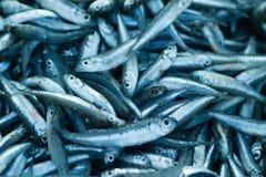 Fresh raw sea fish. In market Stock Photo