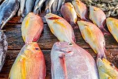 Fresh raw fish at market. Fresh raw sea fish at market in Asia near fishermen village Stock Photography