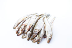 Fresh raw sea fish on white Stock Image