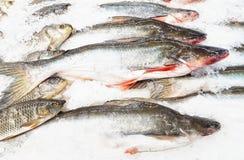 Fresh  sea fishes on crushed ice. Fresh raw sea fishes on crushed ice Stock Photos
