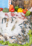 Fresh raw sea foods Stock Image
