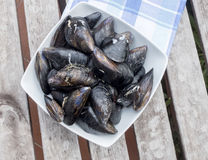 Fresh and raw sea mussels in white ceramic bowl Royalty Free Stock Photos