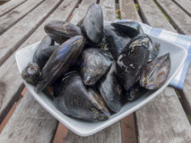 Fresh and raw sea mussels in white ceramic bowl Royalty Free Stock Image