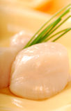 Fresh raw sea scallops. With a garnish of chives Stock Photography