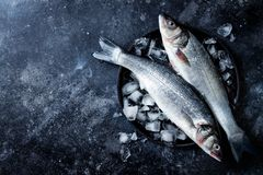 Fresh raw seabass fish on black stone background with ice. Culinary seafood background. Top view, copy space royalty free stock photos