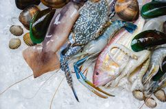 Fresh raw seafood on ice background / Shellfish shrimps prawns crab shell cockles mussel squid octopus stock photography
