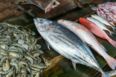 Fresh raw seafood on market. Fresh raw seafood on asian market Stock Images