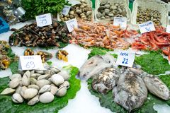 Fresh raw seafood and shellfish on green leaves and ice with price labels sold on fish market in barcelona. Shrimps, clams, parcel royalty free stock photo