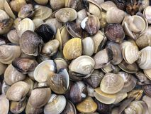 Fresh raw shellfish. Sell in the local market Royalty Free Stock Photo