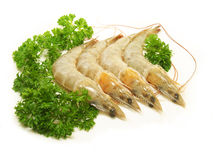 Fresh Raw Shrimp. Uncooked shrimp with parsley, raw prawn cook seafood preparation stock photos
