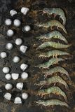 Fresh raw shrimp flat lay in a row with pieces of ice on a dark background. The view from the top stock image