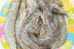 Fresh raw shrimp. Fresh raw shrimp for food background Royalty Free Stock Images
