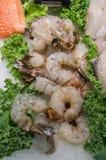 Fresh Raw Shrimp. Fresh raw frozen shrimp on ice with kale garnish Stock Images