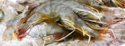Fresh raw shrimp. Isolated on the white background Royalty Free Stock Image