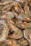 Fresh raw shrimps Stock Photos