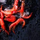 Fresh raw shrimps on black background with ice - Food background Stock Photography