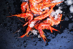 Fresh raw shrimps on a black board with ice - Food background wi. Th copy space Stock Images