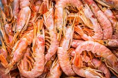 Fresh raw shrimps close-up, background. Fresh cold raw shrimps close-up, background, top view Stock Photos