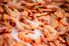 Fresh raw shrimps on display on ice on fishermen Stock Photography