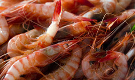 Fresh raw shrimps. Group of fresh raw red shrimps Royalty Free Stock Photo
