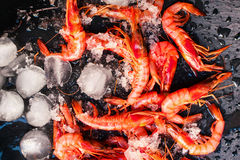 Fresh raw shrimps in ice over black background Stock Image