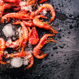 Fresh raw shrimps in ice over black background top view. Close Royalty Free Stock Photos