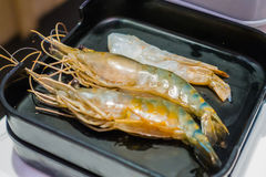 Fresh raw shrimps in a plate . Royalty Free Stock Images