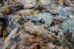Fresh raw shrimps prawns. Closeup on the market Stock Photography