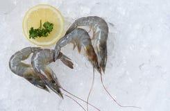 Fresh raw shrimps prawns and lemon ice background in the seafood supermarket. Fresh raw shrimps prawns and lemon on ice background in the seafood supermarket stock images