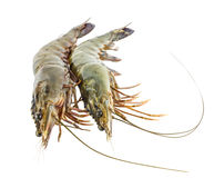 Fresh raw shrimps - seafood isolated Royalty Free Stock Photography