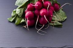 Fresh raw spicy radish. On slate background Royalty Free Stock Image