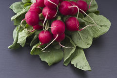 Fresh raw spicy radish. On slate background Royalty Free Stock Photo
