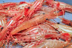Fresh raw seafood selling at fish market Stock Photography