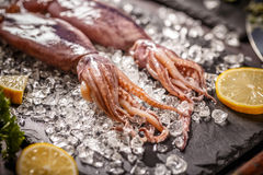 Fresh raw squid. With crushed ice on black slate Stock Photo