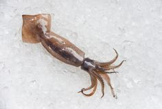 Fresh raw squid on ice background in seafood supermarket. Fresh raw squid on ice background in the seafood supermarket stock images