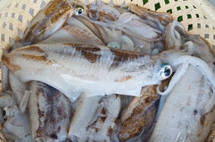 Fresh raw squids in the basket. Ready for cooking in the seafood market Royalty Free Stock Photos