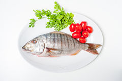 Fresh raw striped sea bream murmurs with parsley and tomatoes Royalty Free Stock Photography
