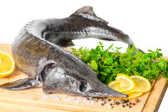 Fresh raw sturgeon fish with greens, lemon, different peppers an Royalty Free Stock Images
