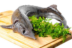 Fresh raw sturgeon fish with greens on wooden plank is isolated Royalty Free Stock Images