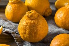 Fresh Raw Sumo Oranges. Ready to Eat royalty free stock photos
