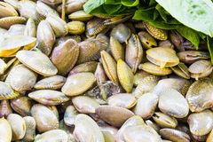 Fresh raw Surf clam. With texture background Royalty Free Stock Photography