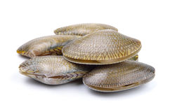 Fresh raw Surf clam on white background Royalty Free Stock Images