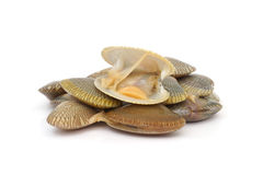 Fresh raw surf clams. On white background Royalty Free Stock Images