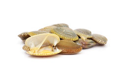 Fresh raw surf clams. On white background Stock Photo