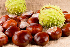 Fresh raw sweet chestnuts Stock Images