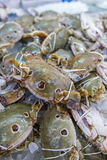 Fresh and raw THREE-SPOT SWIMMING CRAB in seafood market Stock Images