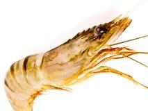 Fresh raw tiger prawn Royalty Free Stock Images