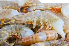 Fresh raw tiger prawns Stock Images